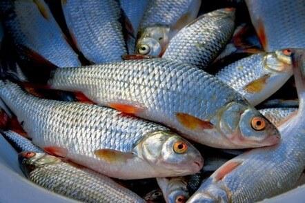 у Черкасах можуть відкрити музей рибальства