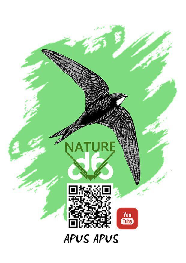 D6 Nature