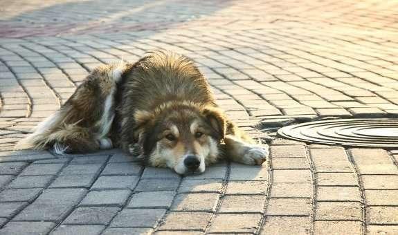 Студенти Черкаського вишу зібрали понад 3 тисячі гривень на допомогу безпритульним тваринам