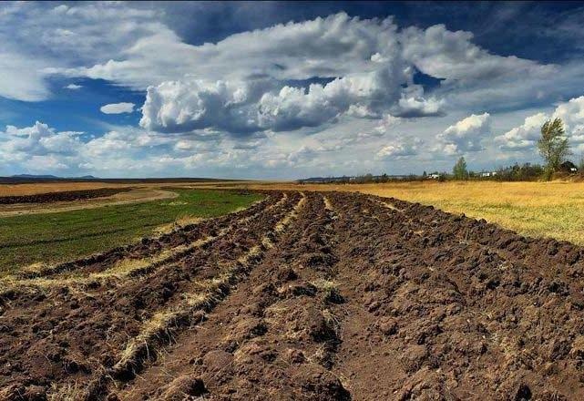 """30 гектарів землі """"роздав"""" голова села на Черкащині"""