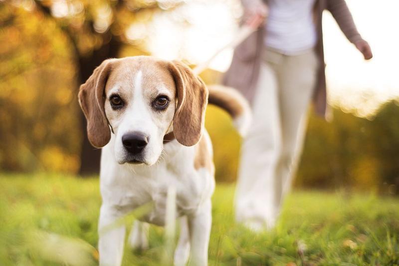 Собачі сюрпризи: чи прибирають черкасці за собаками?