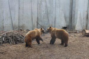 У черкаському зоопарку чимало відвідувачів навіть під час реконструкції (фоторепортаж)