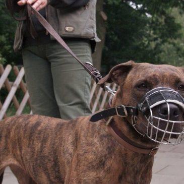 У Черкасах тепер не можна вигулювати собак потенційно небезпечних порід без намордників